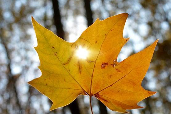 sol de otoño e invierno